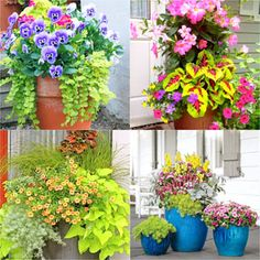 Colorful flower gardening in pots made easy with 38 best designer plant list for each container and sun vs shade locations. Grow a beautiful flower garden with these proven combinations and success tips! - A Piece of Rainbow Herb Garden In Kitchen, Veg Garden, Garden Trellis, Garden Planters, Garden Beds, Balcony Gardening, Garden Shrubs, Concrete Planters, Vegetable Gardening