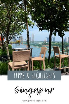3 days in Singapore sights, highlights and tips - Trend Greenhouse Gardening 2019 Plaza Hotel, Infinity Pools, Ubud, Marina Bay Sands, Singapore Sights, Faux Wood Beams, Rooftop Pool, Gardens By The Bay, Greenhouse Gardening
