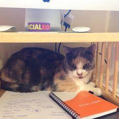 New social media expert #inspiration #SocialSelling #marketing #catsofinstagram #nationalcatday