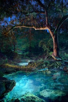 Florida Springs, trees are so beautiful here you cannot even imagine, moss draped huge old lovely trees, ahh ♥ Fantasy Art Landscapes, Fantasy Landscape, Beautiful Landscapes, Landscape Architecture, Nature Pictures, Beautiful Pictures, Landscape Photography, Nature Photography, Florida Springs