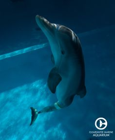 Winter the dolphin! This was a good movie!! #dolphintale