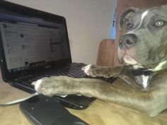 """Mom! MOM!! I just found this awesome page, check it out!"" www.mypitbullisfamily.com"