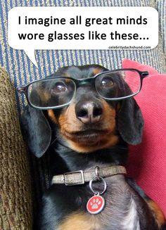 Our friend Crusoe the Celebrity Dachshund! #dachshund @Celeb_Dachshund