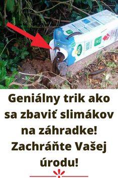 Geniálny trik ako sa zbaviť slimákov na záhradke! Zachráňte Vašej úrodu!