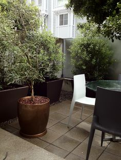 ESPRESSO & BRONZE accent an urban garden.  RS McDANNELL