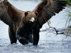 1Stack - Bears With Beaks