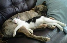 Dogs make good pillows :)