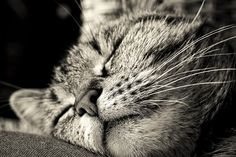 Cat, Animal, Pet, Cat'S Eyes