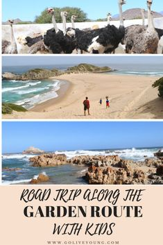 Road Trip Along the Garden Route in South Africa With Kids. Best family experiences along the Garden Route. Fancy riding an ostrich, hiking the Robberg Peninsula or having a lemur of your head? South Africa Safari, George South Africa, Travel Route, Garden Route, Vacation Spots, Vacation Ideas, Africa Travel, Australia Travel, Travel Around The World
