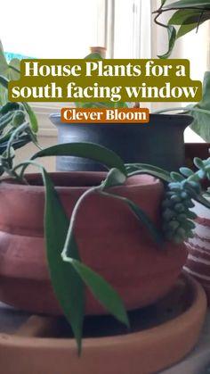 Porch Plants, Potted Plants, Indoor Plants, House Plants, Garden Yard Ideas, Indoor Garden, Kitchen Plants, Garden Tool Storage, Inside Plants