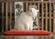 Twitter / nekozamuraiinfo: 玉之丞さま、そんなにガッカリなさらなくても。 #猫侍 #白猫
