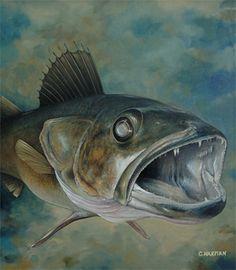 """Coming at You"" Walleye, Chris Harman Trout Tattoo, Fish Wallpaper, Fish Shapes, Rainbow Trout, Fish Art, Wildlife Art, Tropical Fish, Marine Life, Fishing Lures"