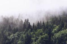 Dimma Träd Skog fototapet/tapet från Happywall