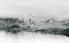 Wildlife Art Print Black and White Art Deer in by FineArtography