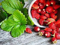 Lesní jahody: zdravé mlsání a pěstování na zahradě