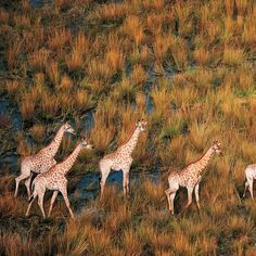 matusadona national park - Google Search - image: andbeyond Zimbabwe, Giraffe, Followers, National Parks, Google Search, World, Animals, Image, Felt Giraffe