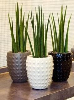 Best Indoor Plants, Outdoor Plants, Green Plants, Potted Plants, Flower Vases, Flower Pots, Plantas Indoor, House Plants Decor, Office Plants