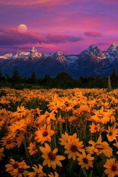 Tetons Magic, Grand Tetons National Park, Wyoming