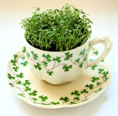 Vintage Teacup Garden - DIY Microgreens Kit (for just about anyone that I need to ship a present to)