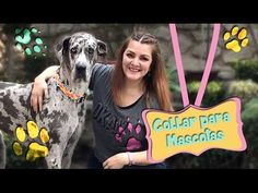 Collar para mascota con Playeras Viejas :: Chuladas Creativas Pet Lovers...
