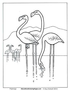 Well Drawn, Educational and High Quality Animal Coloring Pages. Colwell drew on his love of nature and knowledge of zoology to do some pictures of the animals he considered amazing. Some of the inspiration came from direct observation of wild animal. Flamingo Coloring Page, Bird Coloring Pages, Adult Coloring Pages, Coloring Pages For Kids, Coloring Books, Kids Colouring, Flamingo Art, Bird Book, Bird Design