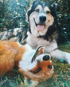 Dog & Fox: best friends!