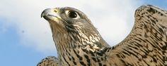 EagleWorld - Ørnereservatet® - Ørnenes Nationalpark