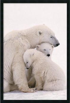 "0-008556>37x25"""" Polar Bear Family Framed Art Gel Coated"
