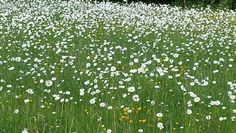 Blumenmeer...