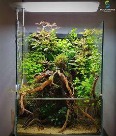 Gecko Terrarium, Orchid Terrarium, Reptile Terrarium, Moss Terrarium, Aquarium Stand, Marine Aquarium, Aquarium Fish Tank, Biotope Aquarium, Indoor Water Garden