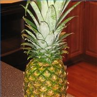 How to Cut Up a Pineapple - Enjoy Fresh Fruit From the Field and Not From a Can!