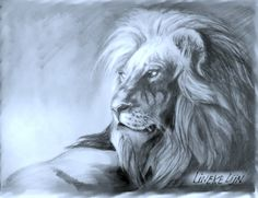 How to draw a Lion in graphite for beginners - easy tutorial by  Lineke Lijn | Hildur.K.O  #drawing #tutorial #howtodraw