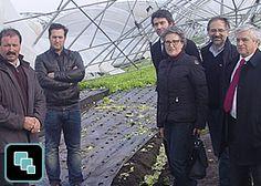 Socialistas com proposta para os estragos da horticultura poveira