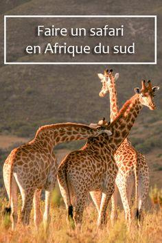 Faire un safari en Afrique du sud : le rêve ! Mon expérience racontée ici #meetsouthafrica #afriquedusud