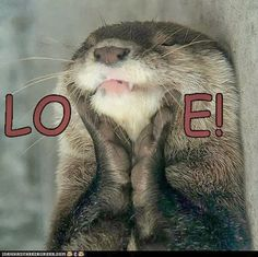 Funny Pictures Of Animals with Otter in Love.