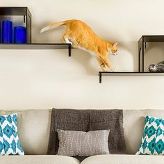 12 Stylish Solutions for Ugly Cat Furniture