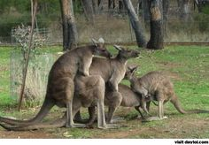 Meanwhile in Australia. It's sad when animals have a better sex life than you.