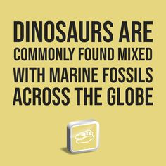 Dinosaurs are commonly found mixed with marine fossils across the globe and are often buried in so-called marine rocks. Marine Iguana, Marine Fish, Dinosaur Bones, Dinosaur Fossils, Sea Dinosaurs, University College Cork, Institute For Creation Research, Species Of Sharks, Empirical Evidence