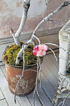Blog con hermosas imagenes......