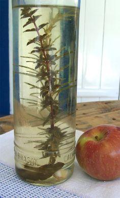 receita de vinagre de maçã