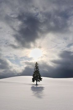 """One tree of the evening in March-Colors"" by Kent Shiraishi, Biei, Hokkaido, Japan."