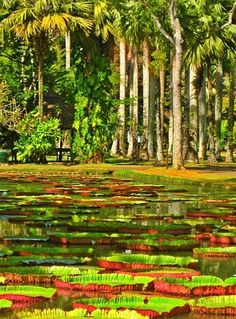 MAURITIUS! Visit the Pamplemousses district in Mauritius! #Mauritius