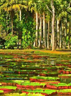 MAURITIUS! Visit the Pamplemousses district in Mauritius! #Mauritius