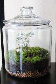 Lauren Spindle : Artist Blog: How to make a Minnesota terrarium