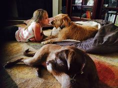 Snoozer Cozy Cave Dog Beds | Gallery of Happy Customers!