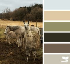 Creature Color - http://design-seeds.com/index.php/home/entry/creature-color6