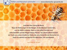 Die heilende Wirkung des Honigs http://islamische-sprueche.de/quran-zitate/die-heilende-wirkung-des-honigs/