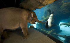 an-elephant-meets-a-sea-lion-800x500