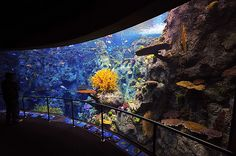 One of my favorite places to visit of all time... the Aquarium of the Pacific.