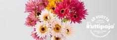 Kukkia Plants, Plant, Planets
